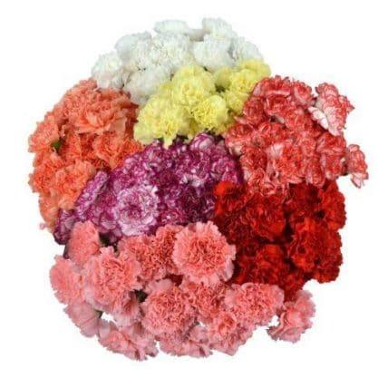 1,000 Fresh Flower Carnation Wholesale Flowers - J R Roses Wholesale Flowers