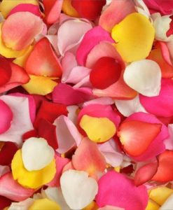 293815376 247x300 - Assorted Color Rose Petals in Wholesale Bulk
