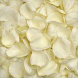 293815384 160x160 - White Wax Flower Wholesale Wedding Flowers