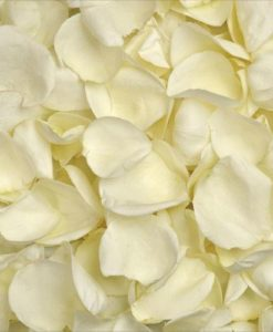 293815384 247x300 - White (Ivory) Rose Petals in Wholesale Bulk