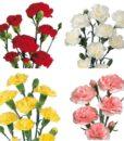 293816128 114x130 - Orange Mini Carnation Flower in Wholesale Bulk