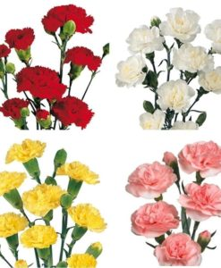 293816128 247x300 - Assorted Mini Carnation Flower