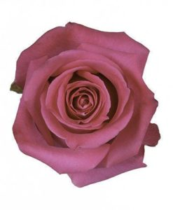 293816516 26fa4157 5c63 41da 90e8 ada0231fbc10 247x300 - Topaz Hot Pink Fuchsia Roses Wholesale Wedding Flowers