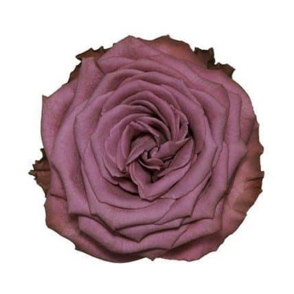 294748034 - Lavender Blueberry Roses Wholesale Wedding Flowers