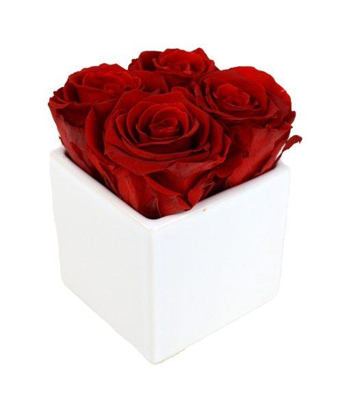 4 Red Preserved Roses in White Ceramic Cube
