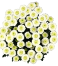 Button Pompom White