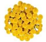Button Pompons Yellow