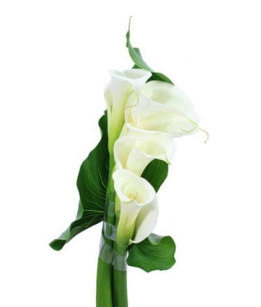 Calla Lilly Bouquets