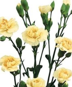 Cream Miniature Carnation Spray