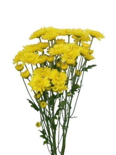 Cushion Yellow Pompons