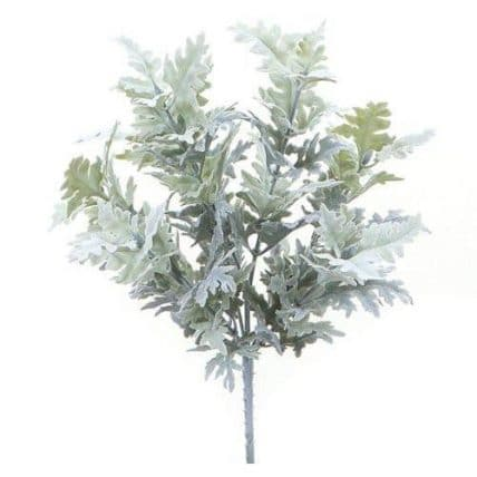 Dusty Miller Foliage