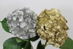 Gold and Silver Hydrangea
