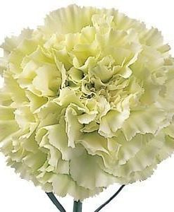 Green Carnation Wedding Flowers