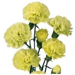 Green Miniature Carnation Spray