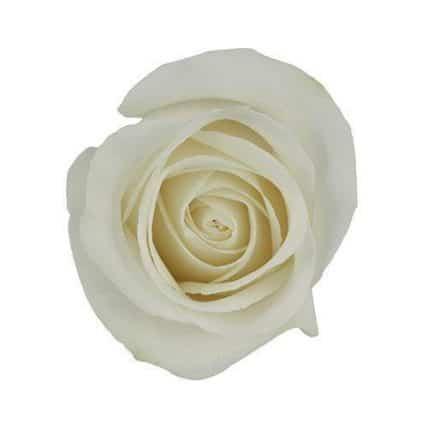 Ivory White Rose Vendela Rose