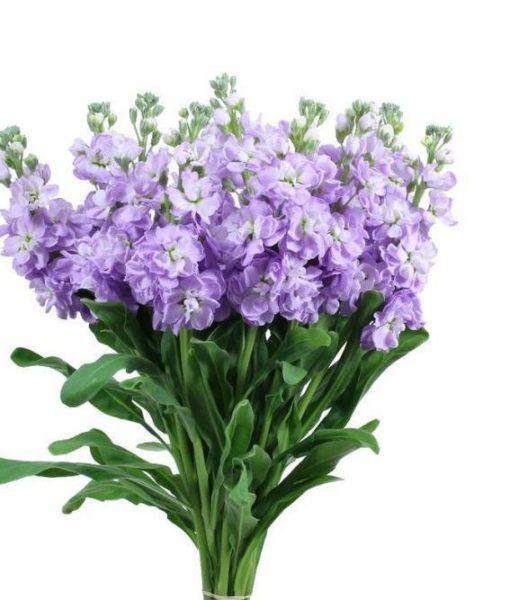 Lavender Stock Wedding Flowers