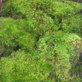 Moss Mood