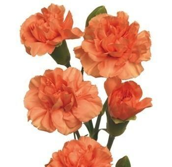 Orange Mini Carnation flower