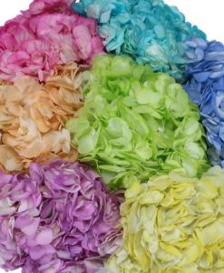 Pastel Colors tinted hydrangeas