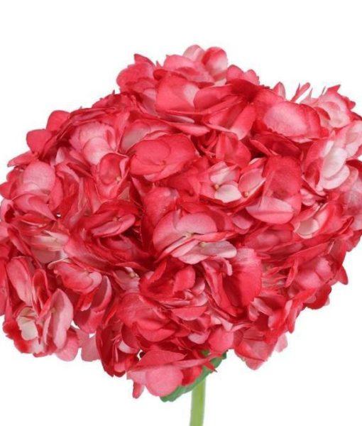 Red tinted Hydrangeas