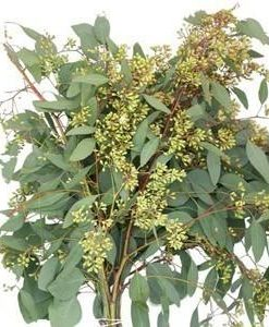 Seeded Eucalyptus