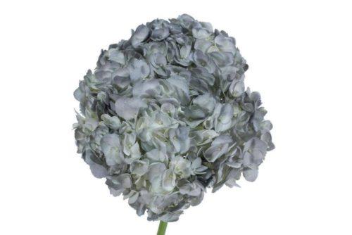 Silver Hydrangea flower