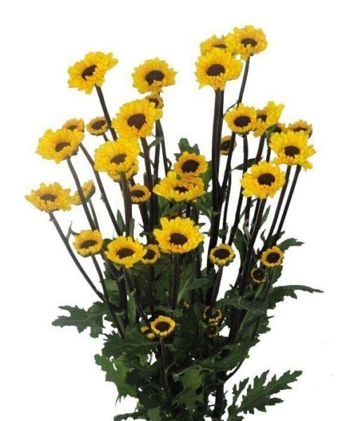 Viking Micropoms 510x600 - Micropoms Viking Wholesale Bulk Flowers (12 bunch)