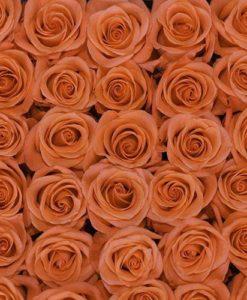 bulk coral roses 247x300 - 100 Coral Roses