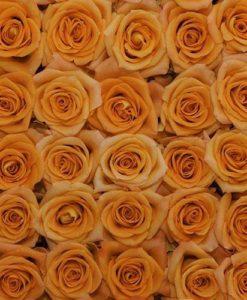 bulk orange roses 247x300 - 100 Orange Roses