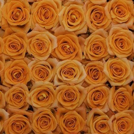bulk orange roses - 100 Orange Roses