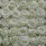 bulk_white_roses