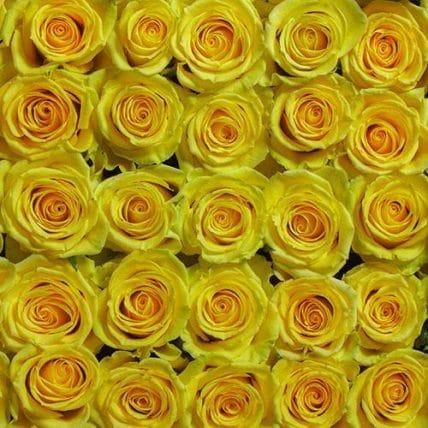 bulk yellow roses - 100 Yellow Roses