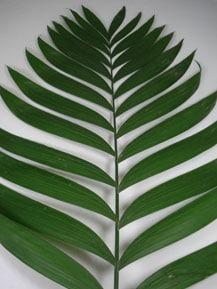Emeral Foliage