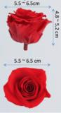 large_size_preserved_rose_heads-ebay