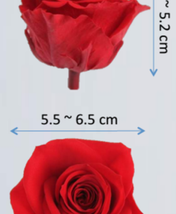 large size preserved rose heads ebay 56b786fb a360 45ae 860d 6536294a9338 247x300 - Preserved Roses 60 Heads