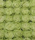 ligt_green_roses_top_view