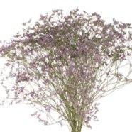 Limonium Flowers
