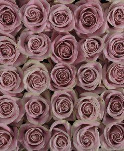 pink roses 247x300 - 100 Pink Roses Bulk