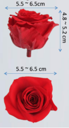 preserved roses size
