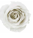 white_e33798ed-e36a-4ceb-97a8-7a2d56742bd9