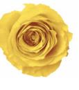 yellow_5f8899ab-1cf4-4e38-a3fa-a590348c6cdc